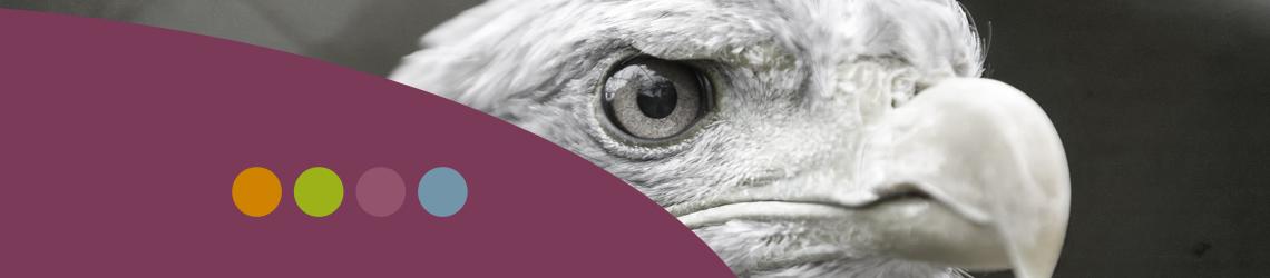 Gordios-1140x250-eagle